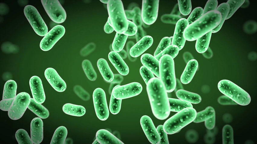 bacteria gut useful